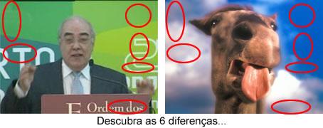 Mário Lino é um Camelo - Descubra as 6 diferenças...